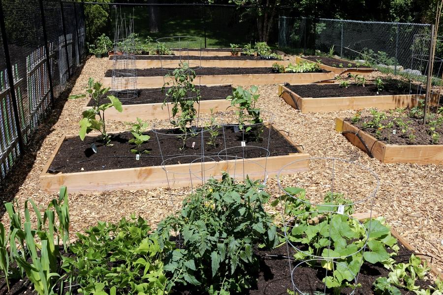 community garden photo